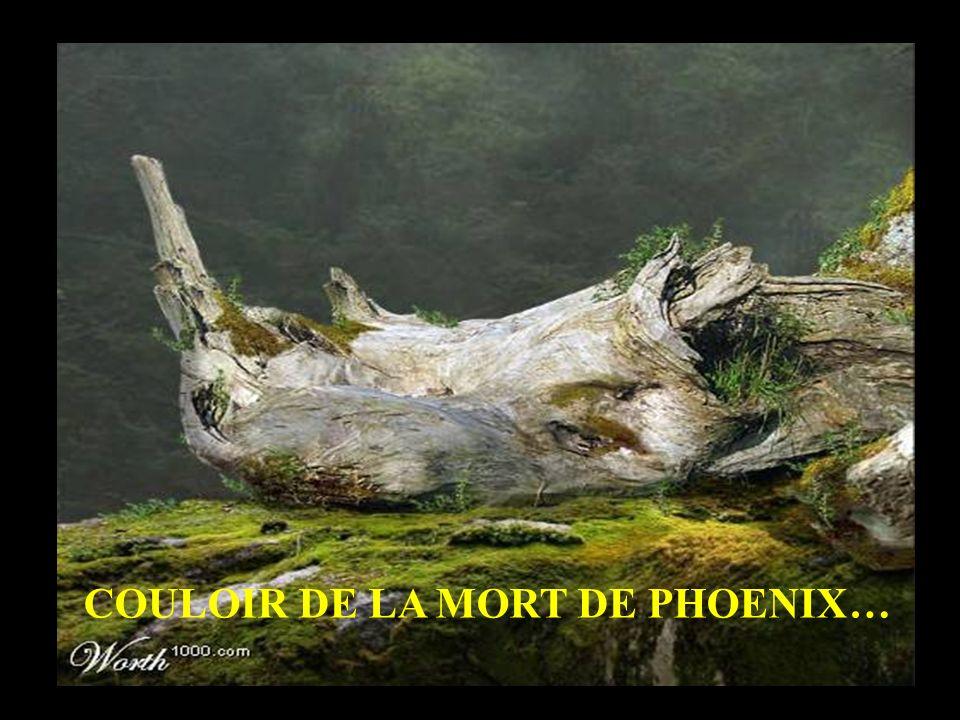 COULOIR DE LA MORT DE PHOENIX…