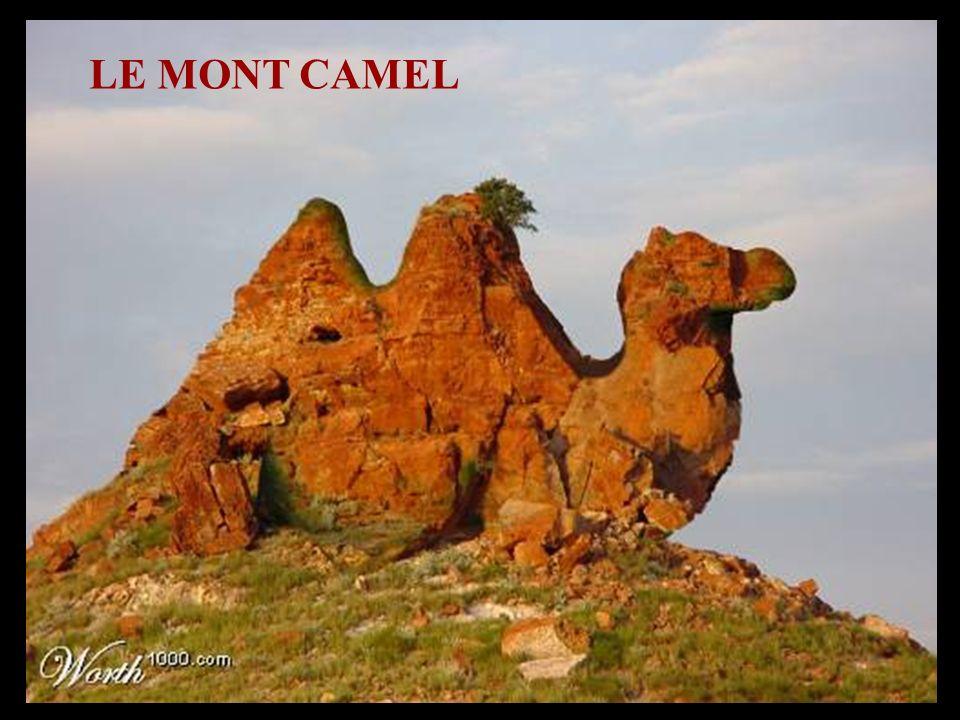 LE MONT CAMEL
