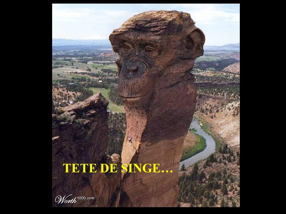 TETE DE SINGE…