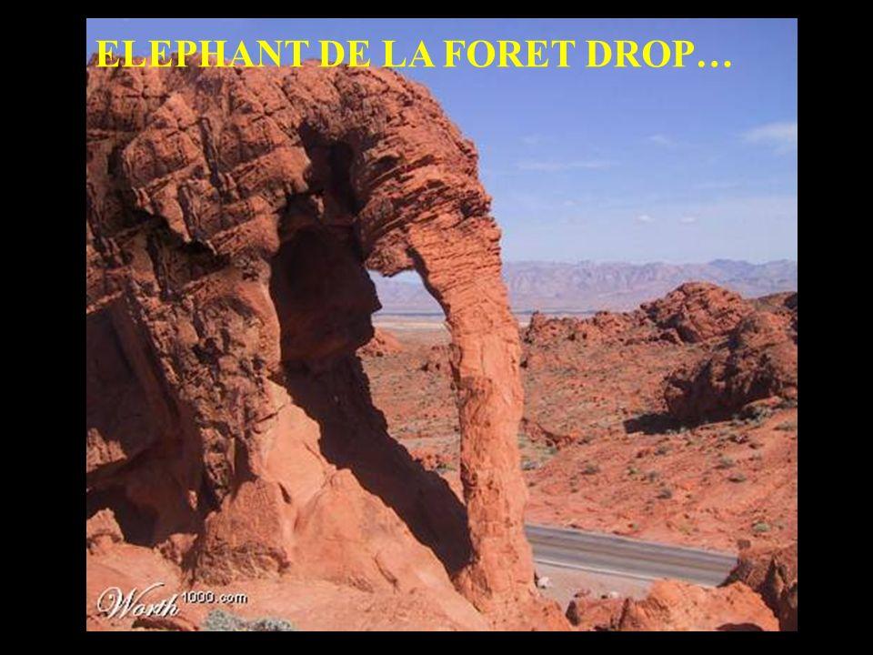 ELEPHANT DE LA FORET DROP…