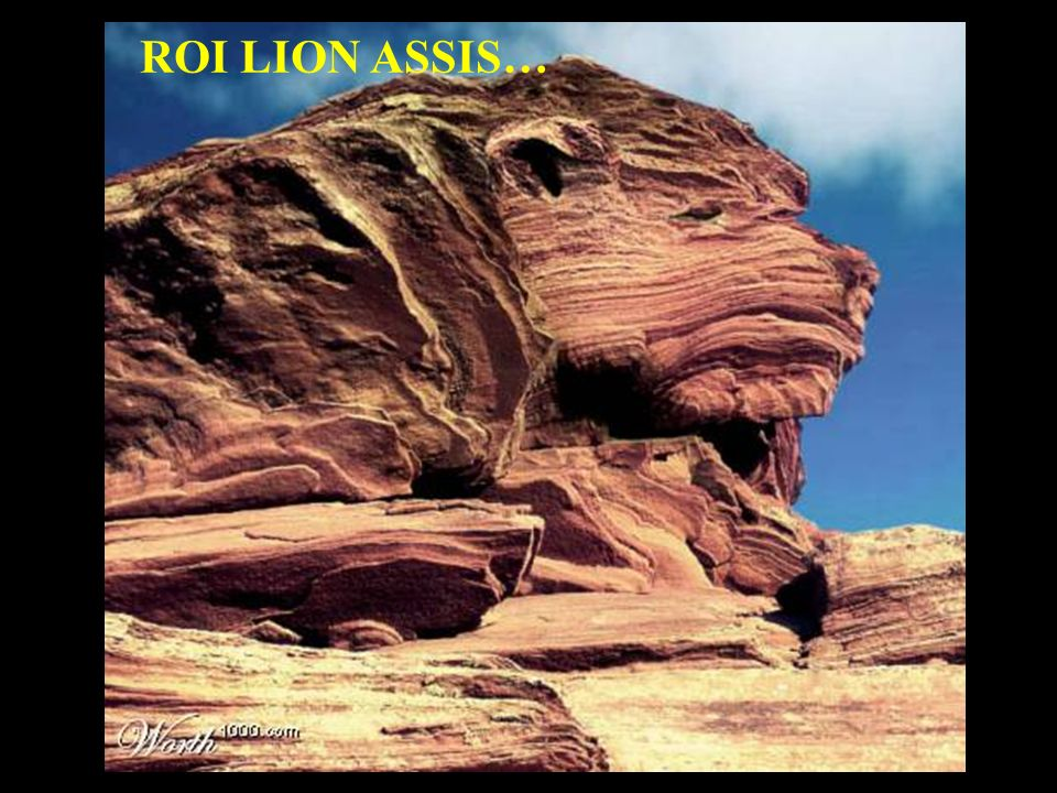 ROI LION ASSIS…