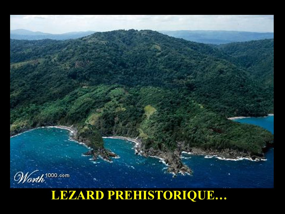 LEZARD PREHISTORIQUE…