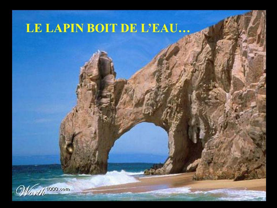 LE LAPIN BOIT DE L'EAU…