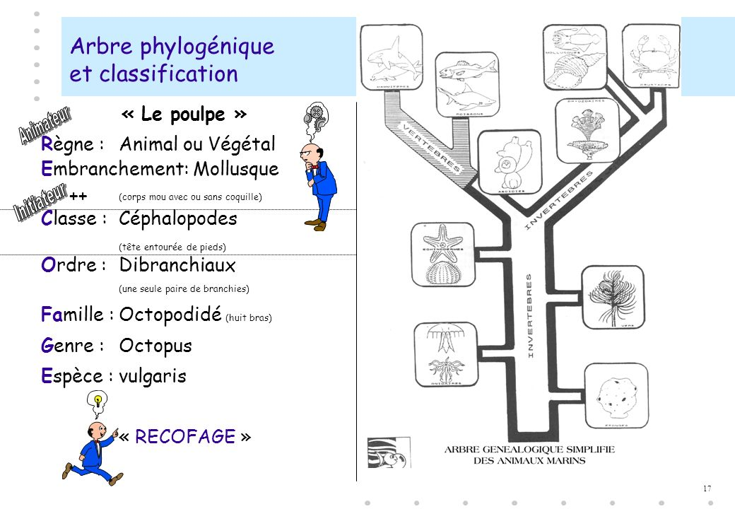 Arbre phylogénique et classification