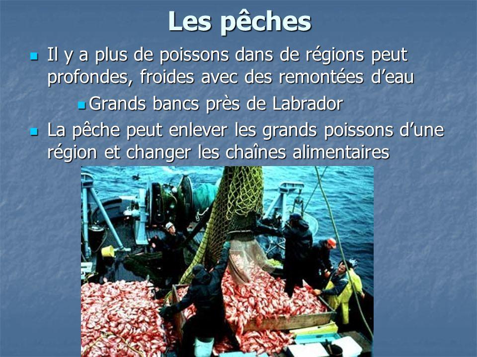 Les pêches Il y a plus de poissons dans de régions peut profondes, froides avec des remontées d'eau.