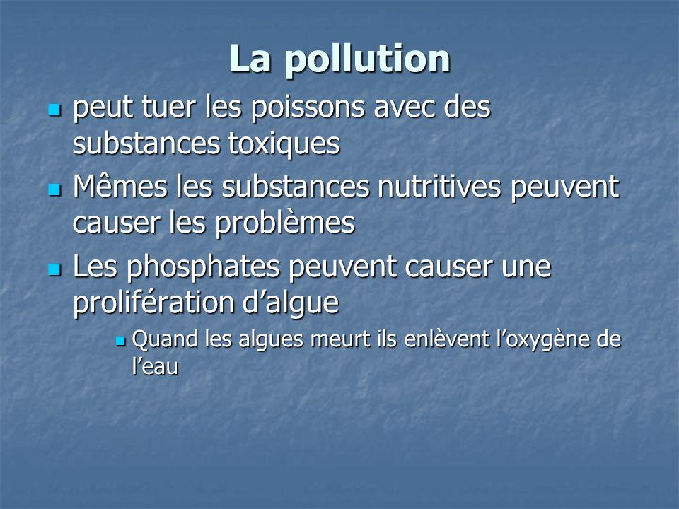 La pollution peut tuer les poissons avec des substances toxiques