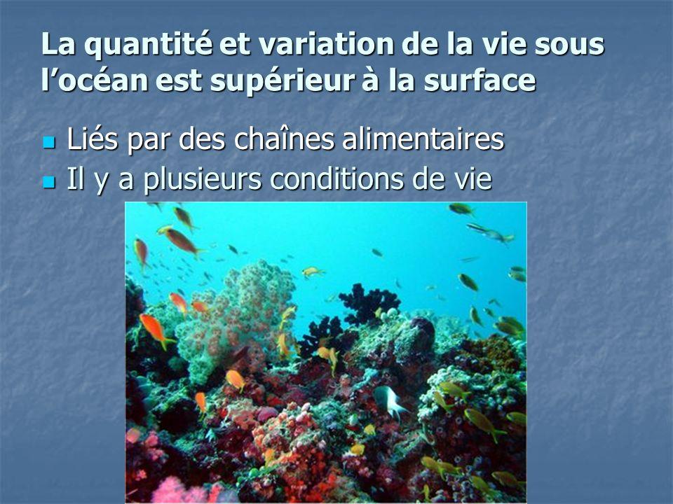 La quantité et variation de la vie sous l'océan est supérieur à la surface