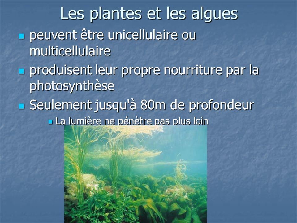 Les plantes et les algues