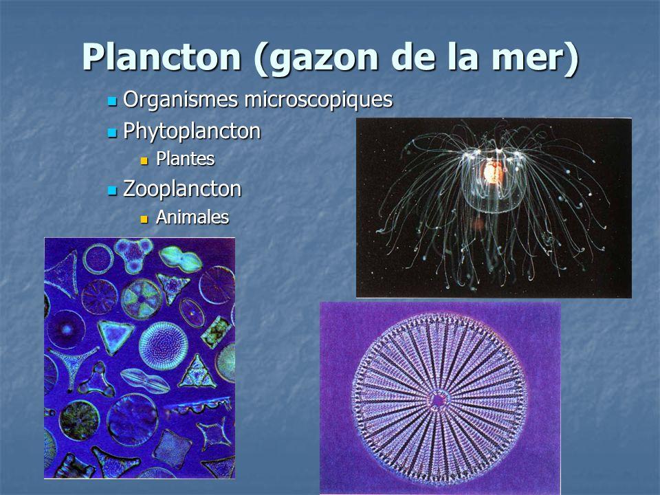 Plancton (gazon de la mer)