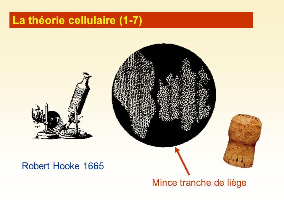 La théorie cellulaire (1-7)