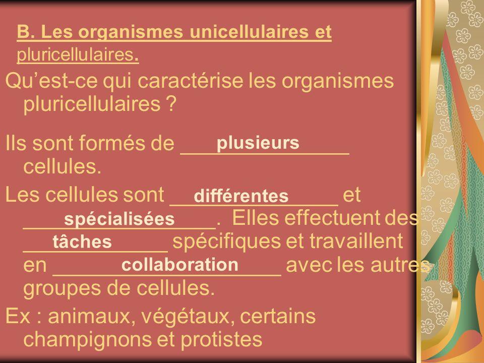 B. Les organismes unicellulaires et pluricellulaires.
