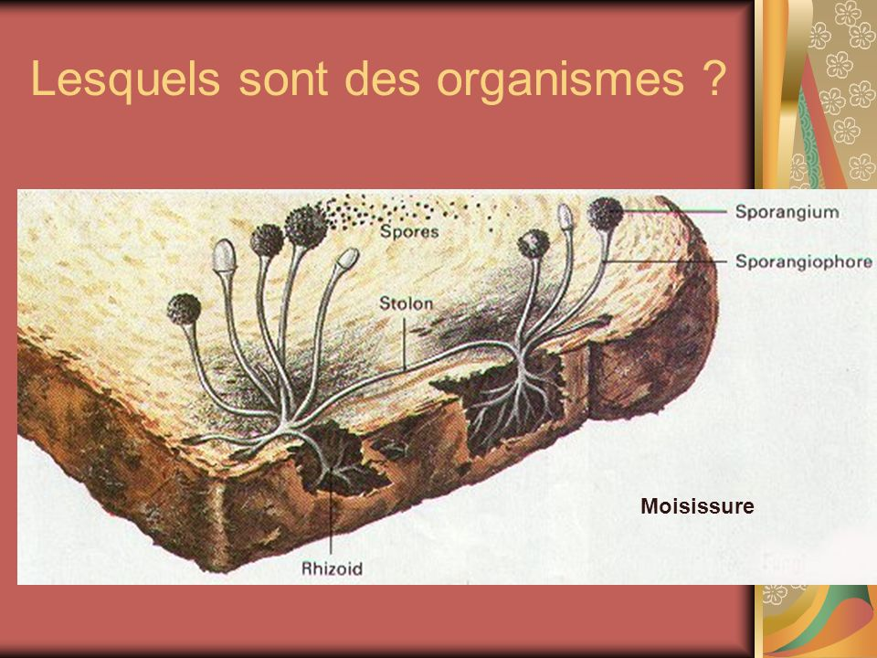 Lesquels sont des organismes