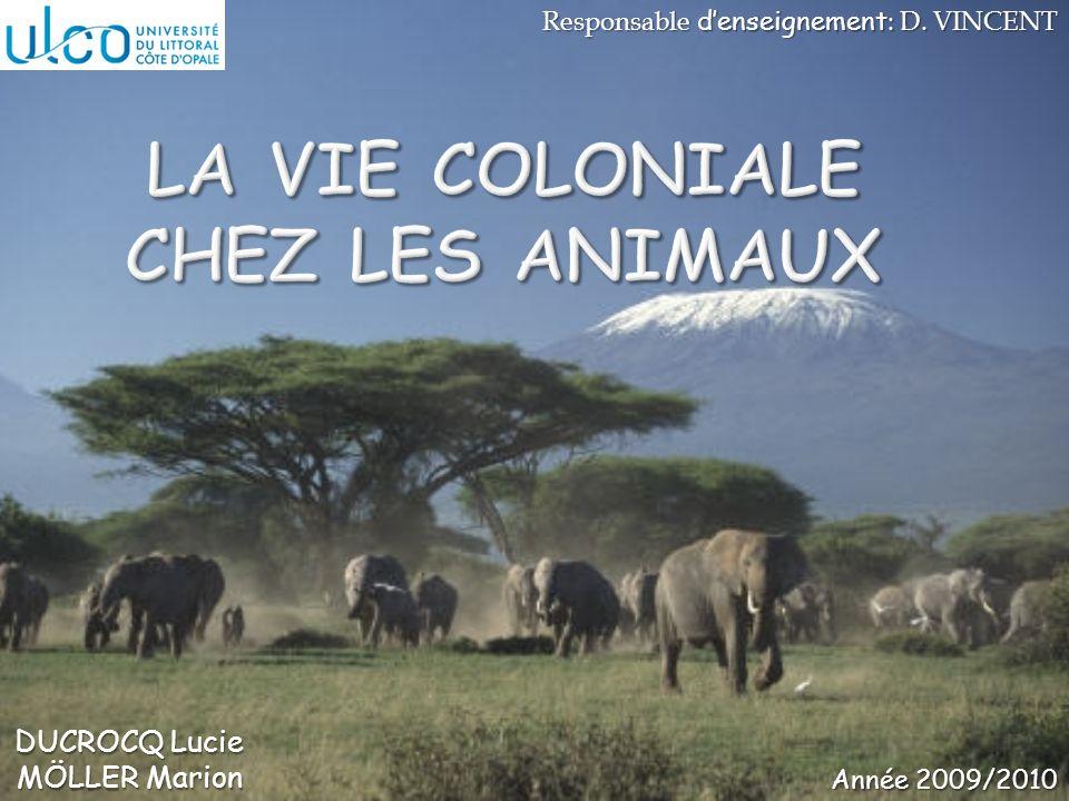 La vie coloniale chez les animaux