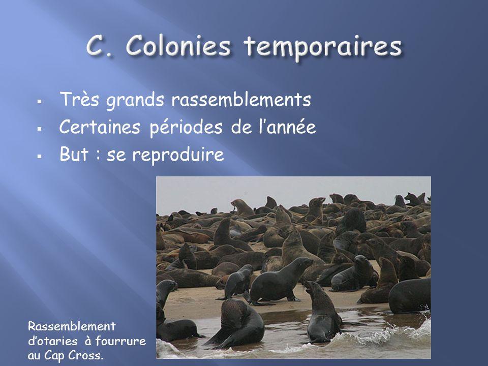 Colonies temporaires Très grands rassemblements