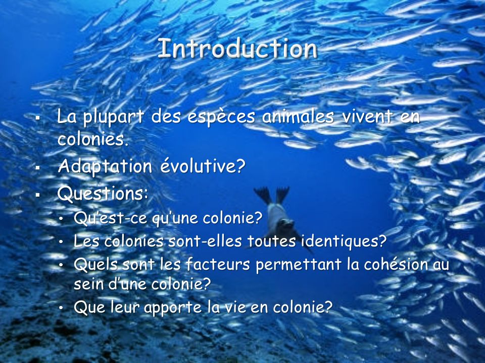 Introduction La plupart des espèces animales vivent en colonies.