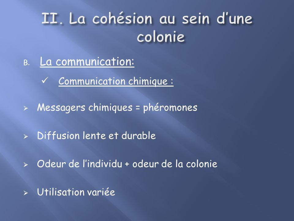 La cohésion au sein d'une colonie