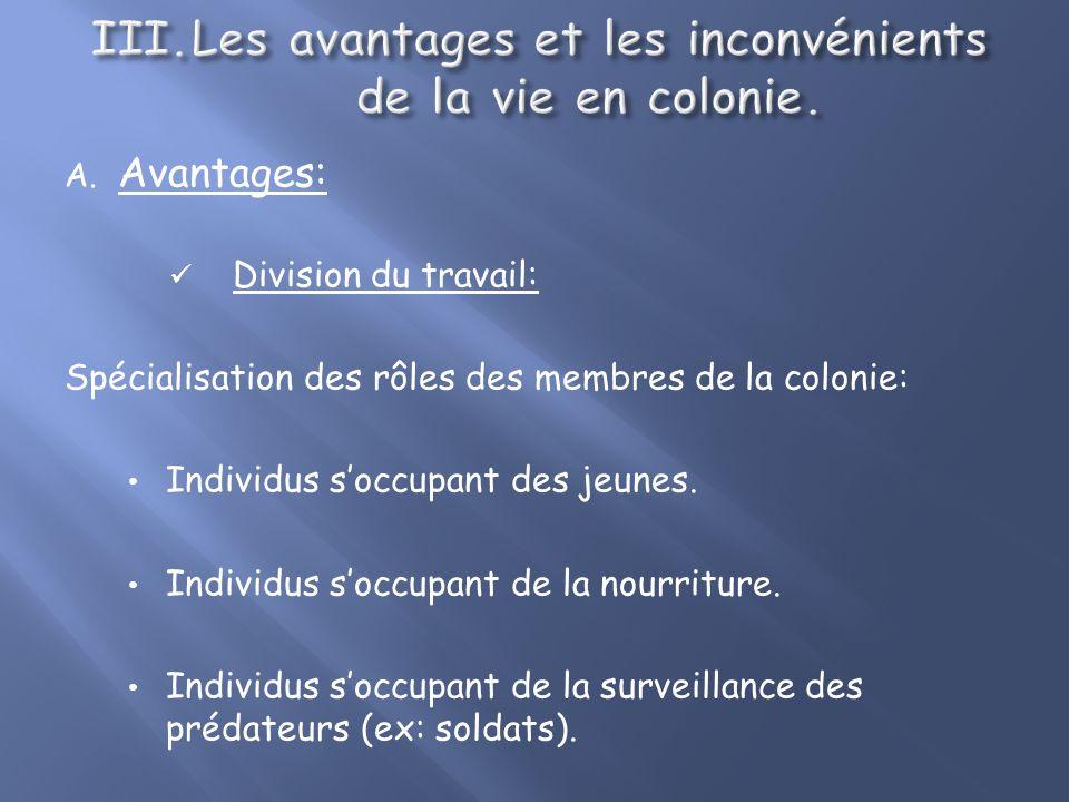 Les avantages et les inconvénients de la vie en colonie.