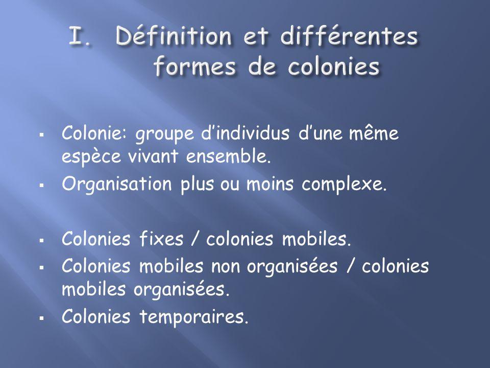 Définition et différentes formes de colonies