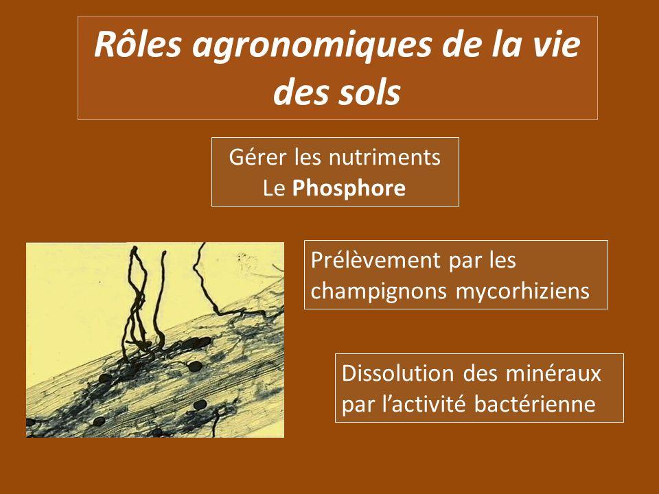 Rôles agronomiques de la vie des sols