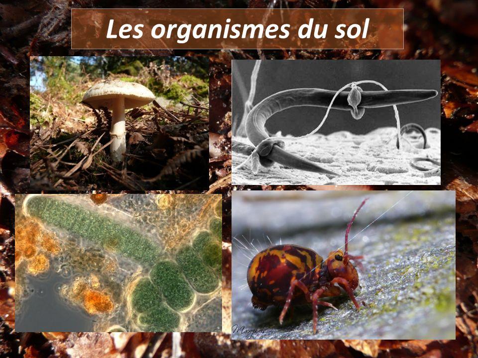Les organismes du sol