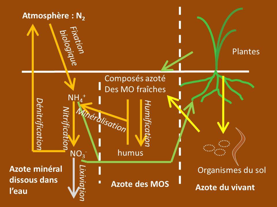Atmosphère : N2 Fixation biologique. Plantes. Composés azoté Des MO fraîches. NH4+ Minéralisation.