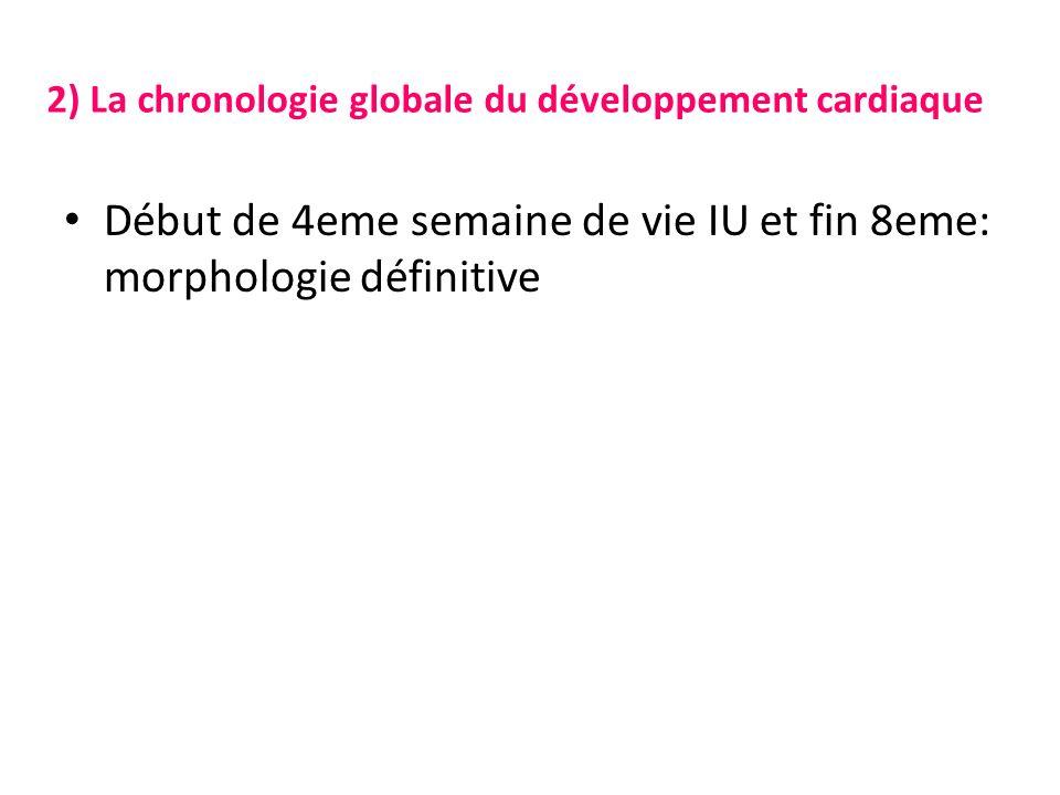 2) La chronologie globale du développement cardiaque