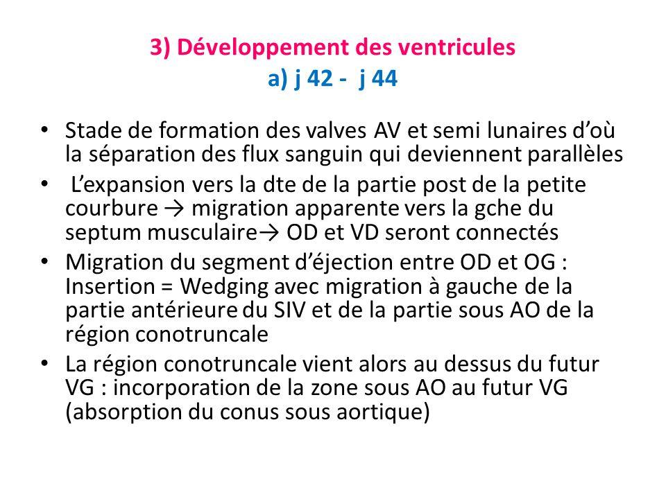 3) Développement des ventricules a) j 42 - j 44