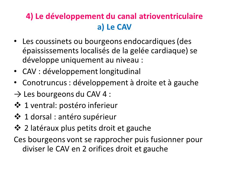 4) Le développement du canal atrioventriculaire a) Le CAV