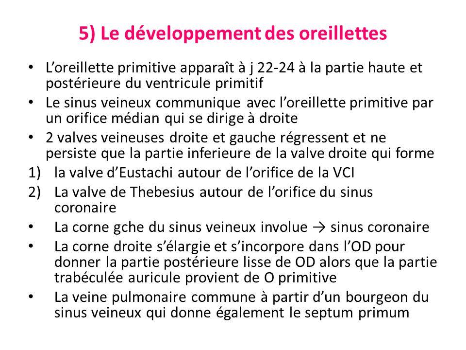 5) Le développement des oreillettes