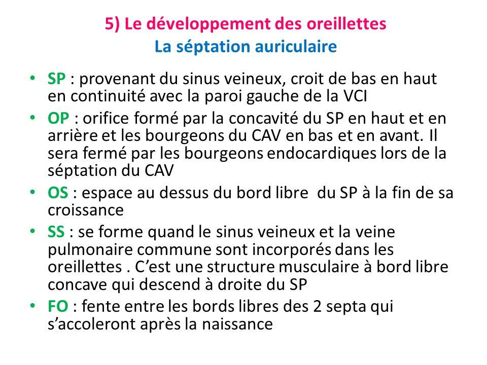5) Le développement des oreillettes La séptation auriculaire