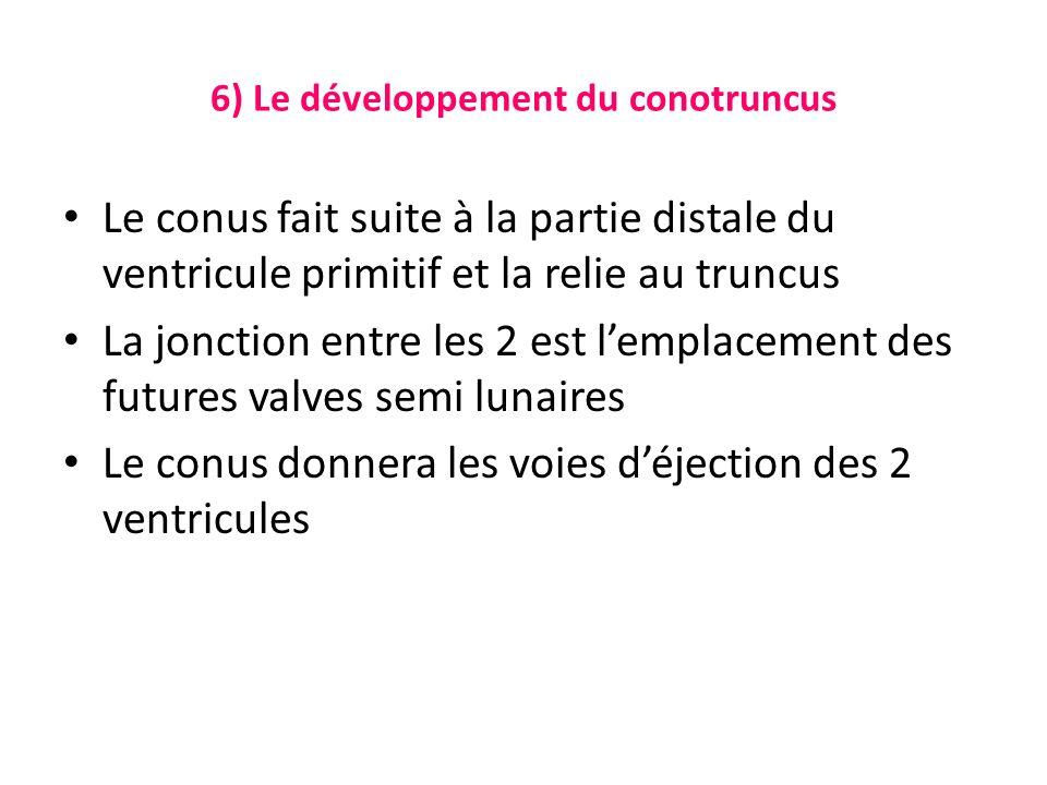 6) Le développement du conotruncus