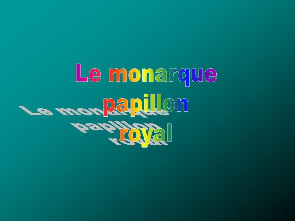 Le monarque papillon royal