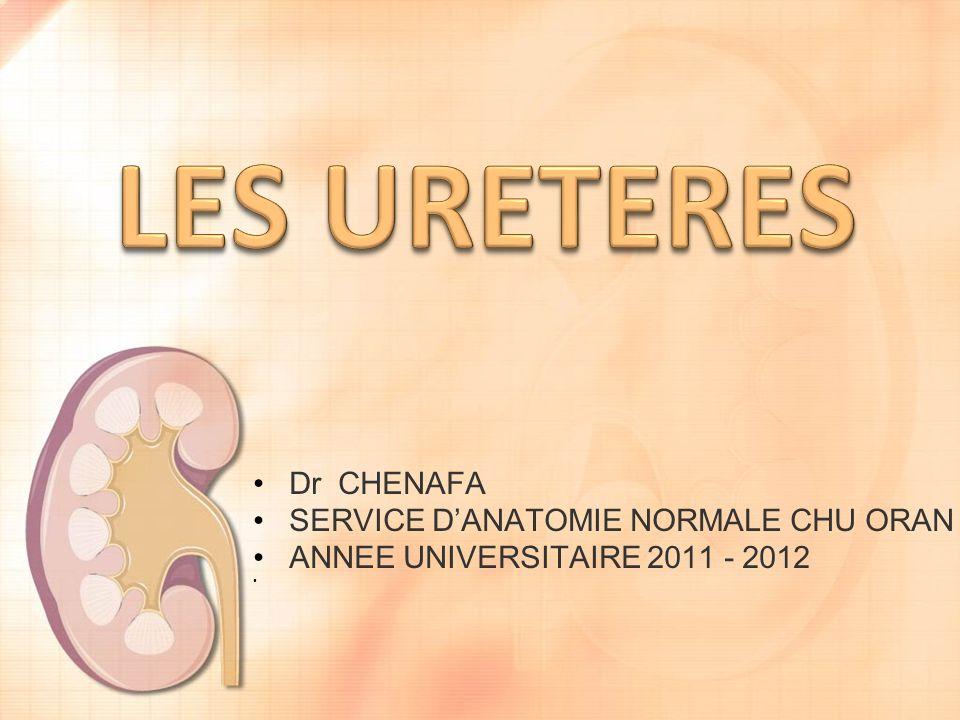 LES URETERES Dr CHENAFA SERVICE D'ANATOMIE NORMALE CHU ORAN