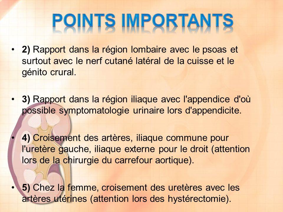 Points importants 2) Rapport dans la région lombaire avec le psoas et surtout avec le nerf cutané latéral de la cuisse et le génito crural.