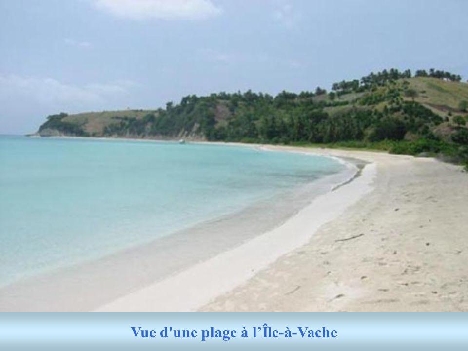 Vue d une plage à l'Île-à-Vache