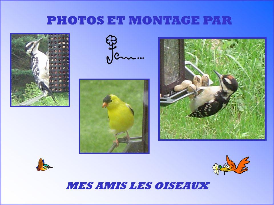 PHOTOS ET MONTAGE PAR MES AMIS LES OISEAUX