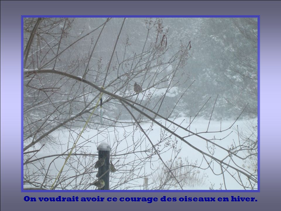On voudrait avoir ce courage des oiseaux en hiver.