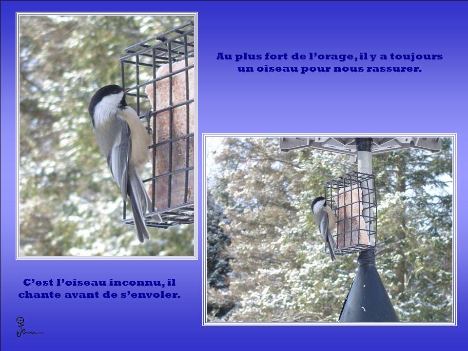 Au plus fort de l'orage, il y a toujours un oiseau pour nous rassurer.
