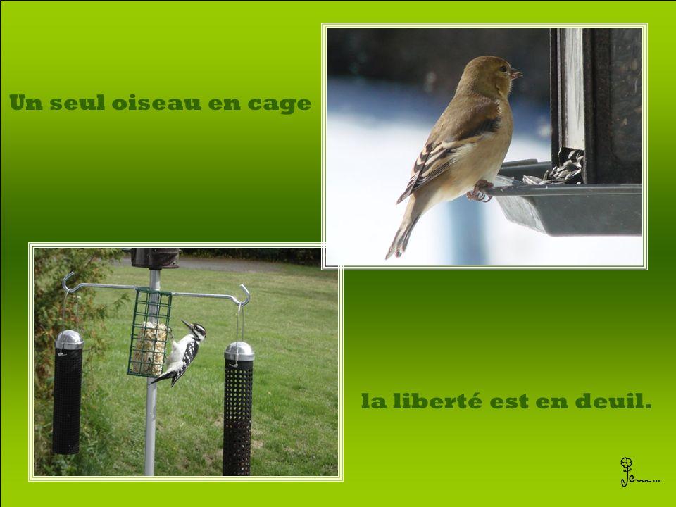 Un seul oiseau en cage la liberté est en deuil.