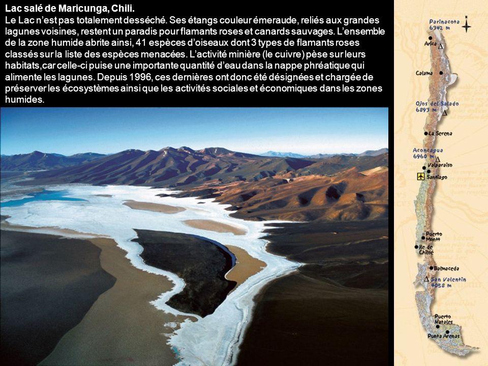 Lac salé de Maricunga, Chili. Le Lac n'est pas totalement desséché