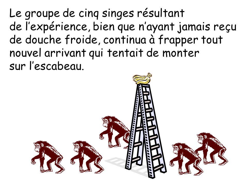 Le groupe de cinq singes résultant de l'expérience, bien que n'ayant jamais reçu de douche froide, continua à frapper tout nouvel arrivant qui tentait de monter sur l'escabeau.