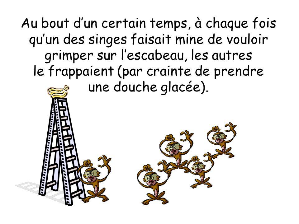 Au bout d'un certain temps, à chaque fois qu'un des singes faisait mine de vouloir grimper sur l'escabeau, les autres le frappaient (par crainte de prendre une douche glacée).