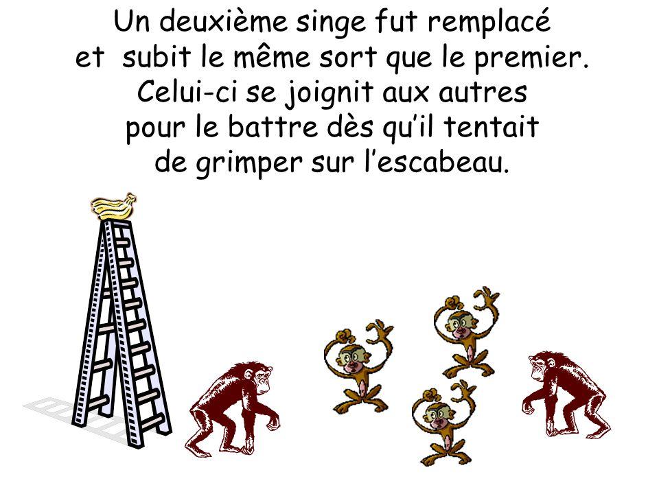 Un deuxième singe fut remplacé et subit le même sort que le premier