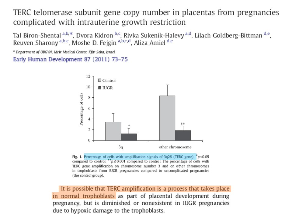 It has also been reported some chromosomal gains of the hTERC telomerase subunit in placentas at delivery of normal pregnancies, while no gains of hTERC were noticed in placentas of pregnancies complicated with IUGR.