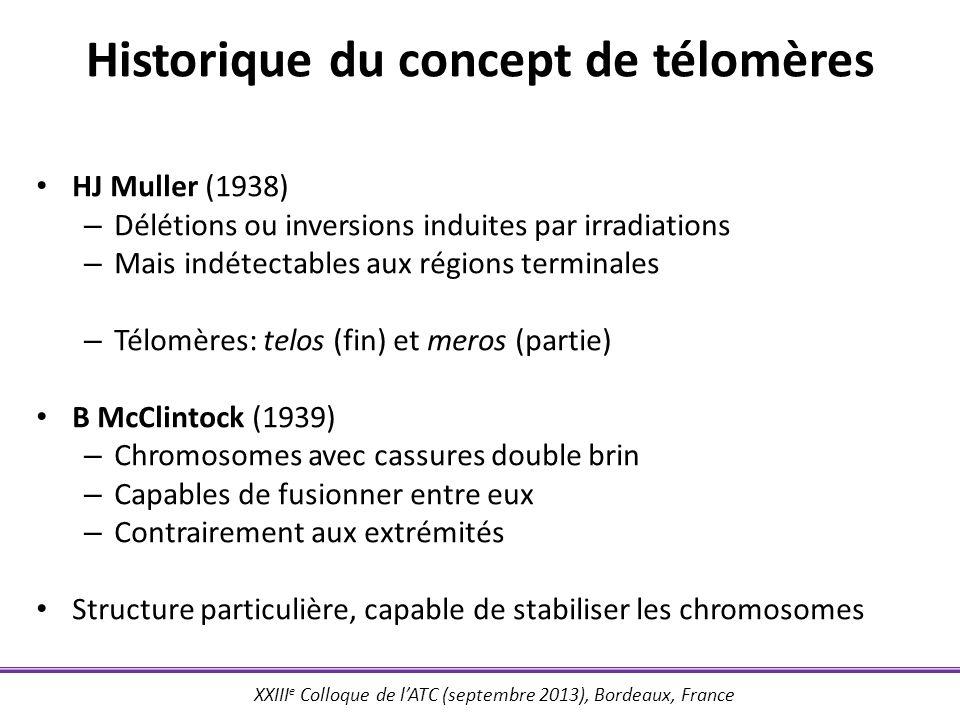 Historique du concept de télomères
