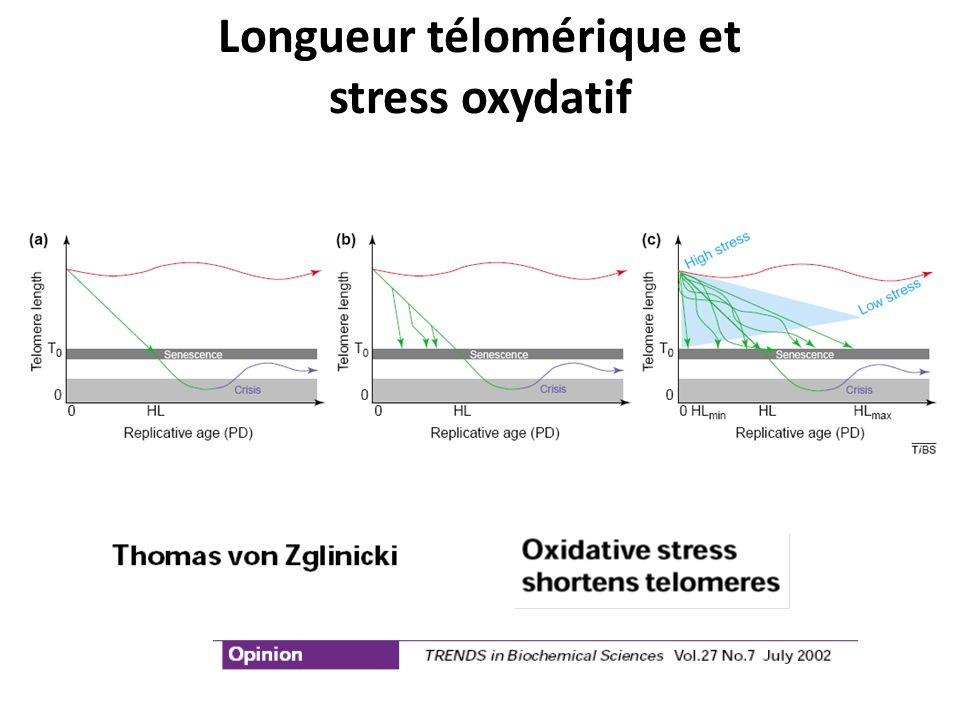 Longueur télomérique et stress oxydatif