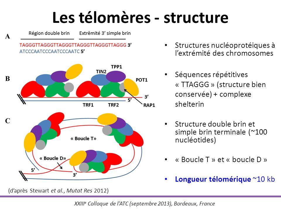 Les télomères - structure