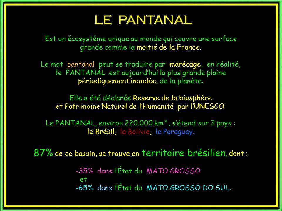 LE PANTANAL Est un écosystème unique au monde qui couvre une surface. grande comme la moitié de la France.