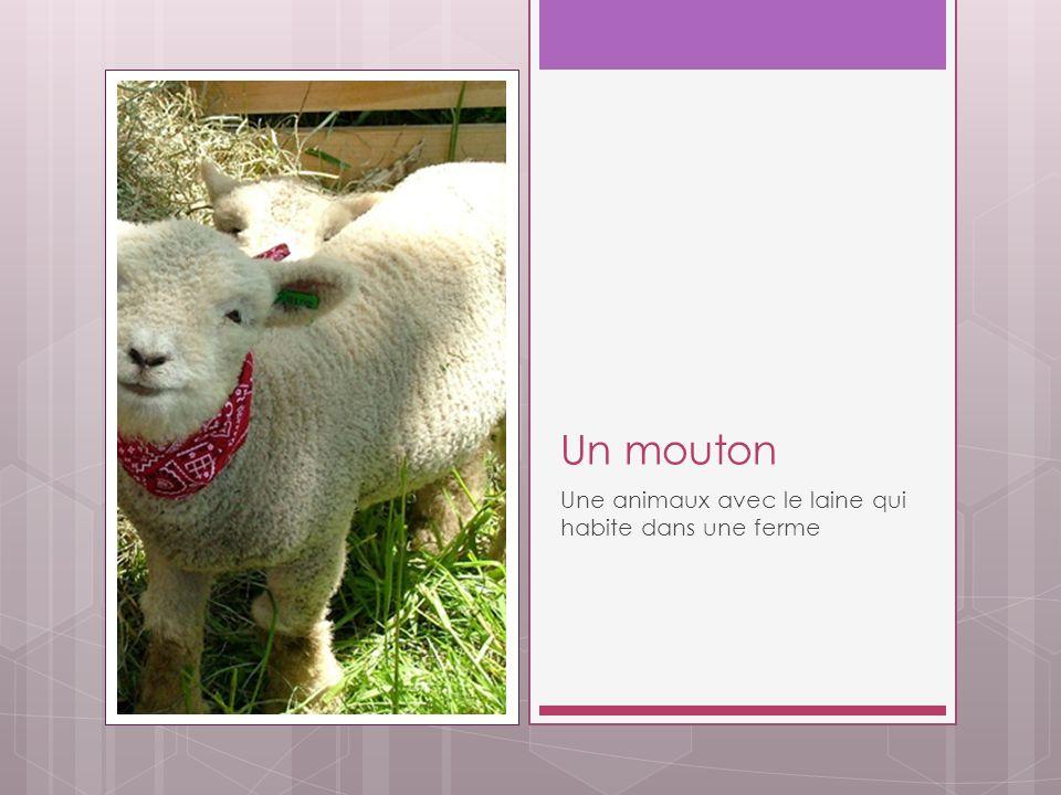 Un mouton Une animaux avec le laine qui habite dans une ferme