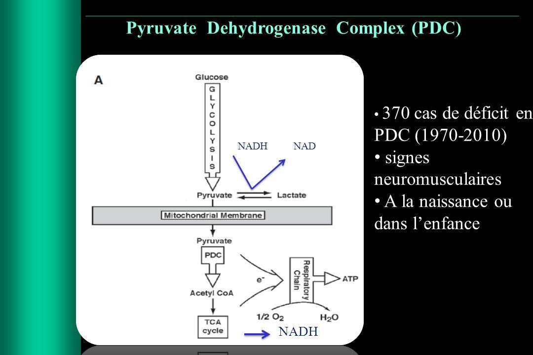 Pyruvate Dehydrogenase Complex (PDC)